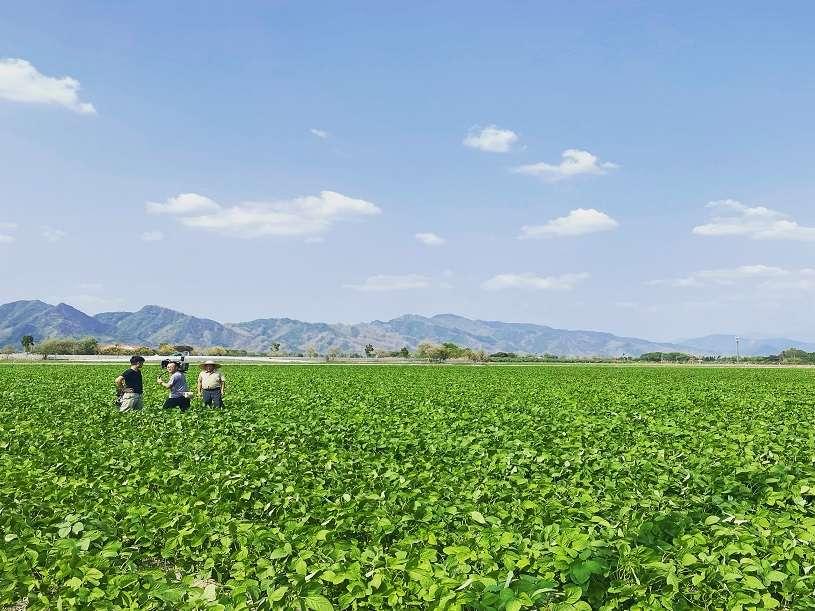 【用愛釀造好豆油】豆油伯讓臺灣小農被世界看見