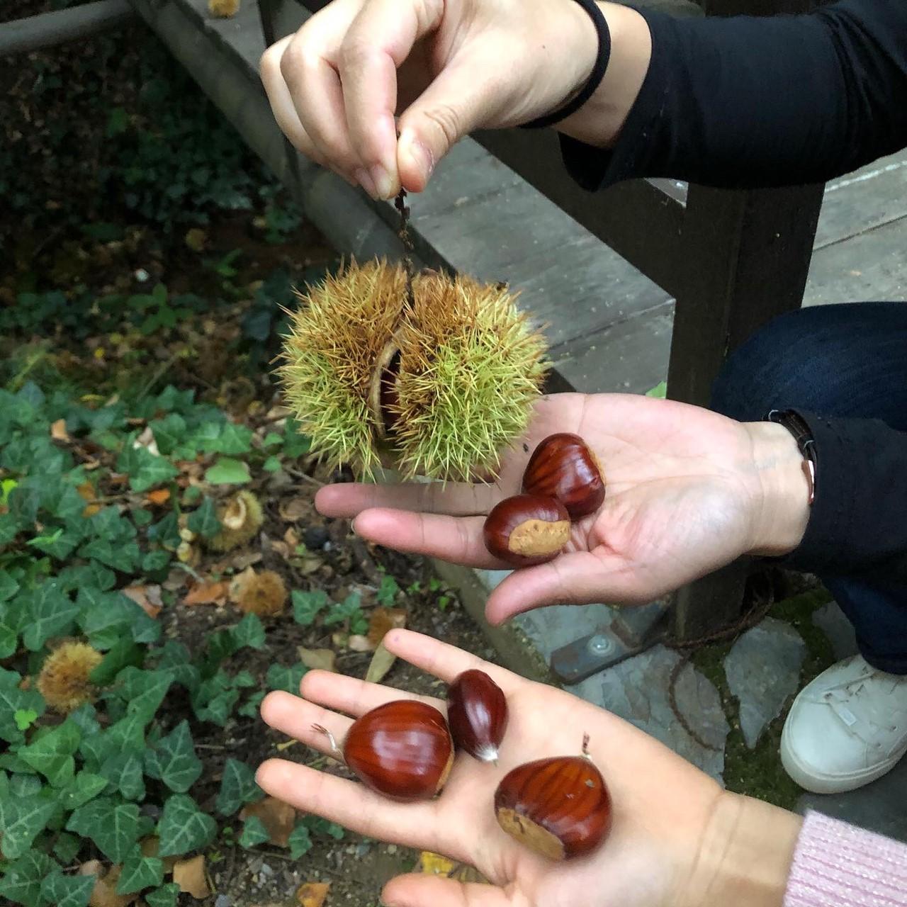 【2019 西班牙橄欖油行】巴狄尼絲莊園-伊比利豬篇